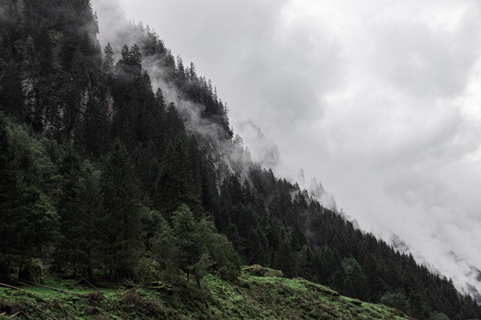 Berg mit Wiese, Bäumen und Nebel am Stillup Stausee